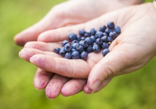 Superfoods That Can Supercharge Your Life