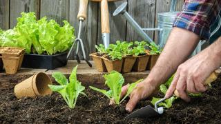 Starting My Own Green Garden
